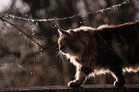 Cat backlit in sun (Thomas)